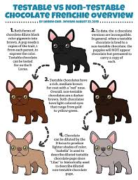 44 Complete French Bulldog Dna Chart