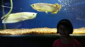 Fish Aquarium in Verna, Goa - 2017 - sharks, tortoises, sting rays ...