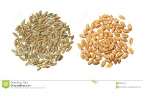 grains clipart wheat seed free png logo coloring pages grains clipart