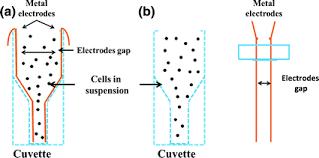 Electroporation For Single Cell Analysis Springerlink