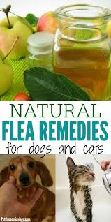 browse all of the all natural flea