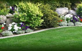 Green Flowers Home Garden Free Wallpaper Hd