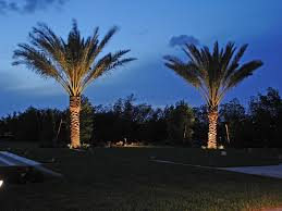 outdoor tree lighting ideas. Bring Your Charleston Palm Trees To Life At Night With Properly Installed Tree Lighting! Outdoor Lighting Ideas A