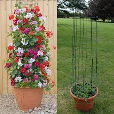 ANYONE CAN MAKE THESE 10 BEAUTIFUL AND USEFUL DIY ACCESSORIES FOR Wall Climbing Plants In Pots