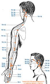 Th Triple Heater Meridian Graphic Chinese Medicine