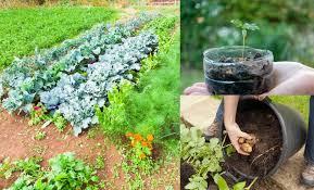 grow veg for free 50 zero cost s