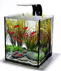 ecoxotic ecopico desktop aquarium office desk aquarium