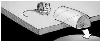 trap car essay mouse trap car essay
