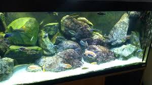 rock aquarium 1 diy decorations