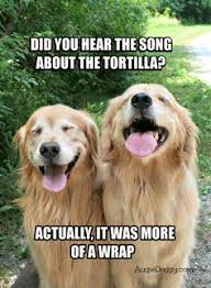 Funny Golden Retrievers on Pinterest | Funny Dachshund, Golden ... via Relatably.com