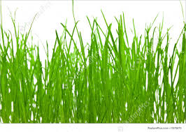 Grass background Brown Featurepicscom Green Grass Background