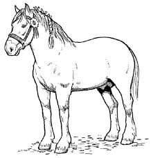 Learn facts about draft horses in this horse fun page then complete the crossword puzzle and color in the picture of the two draft horses pulling the. Free Printable Horse Coloring Pages For Kids