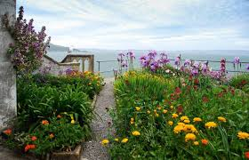 Small Picture Make an Escape to the Gardens of Alcatraz Garden Design