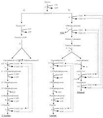 Yogurt Production Flow Chart Process Flow Diagram For Yogurt Production Wiring Diagram
