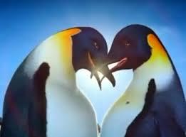 penguin love wallpaper. Beautiful Love Happy Feet Wallpaper Called Penguins In Love Throughout Penguin Love Wallpaper I