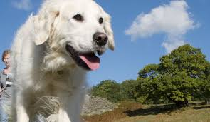 The Bradgate Park Swithland Wood Charity Advice For Dog Owners