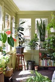 Natasha and the Plant Filled Sunroom Sunroom Apartment therapy