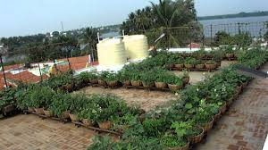 Terrace Kitchen Garden Vegetable Roof Garden Sulur Panchayat Union Office Building