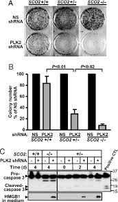 Polo-Like Kinases Mediate Cell Survival In Mitochondrial Dysfunction ...