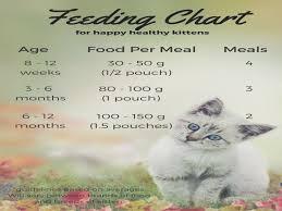 Kitten Feeding Chart Feeding Your Kitten Kitten Food Cat And Kitty Kitten