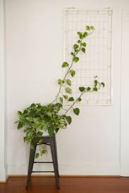 How To Grow Climbing PlantsClimbing Plants Indoor
