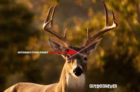 Deer Vitals Chart 5 Best Places To Shoot A Deer For Single Shot Kill Outdoorever