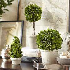 Birch Lane Single Ball Preserved Boxwood Topiary