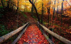 Free Autumn Wallpaper Background ...