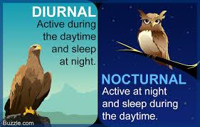 diurnal animals list for kids. Modren List In Diurnal Animals List For Kids C