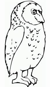 Owl Printable Awesome Free Printable Owl Coloring Pages For Kids