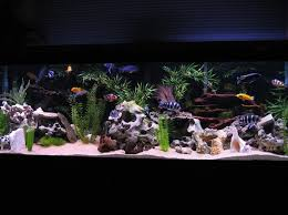 fish tank lighting ideas. african cichlids in my opinion have always been an underrated aquarium usually many hobby or pet owners will look to freshwater community saltwater fish tank lighting ideas a
