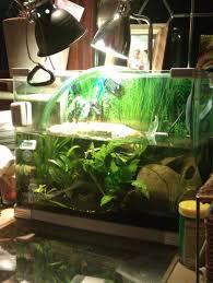 Turtle Tank Decor Watch More Like Turtle Tank Decorations