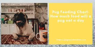 Dog Food Feeding Chart Pug Feeding Chart How Much Food Will A Pug Eat A Day Pug