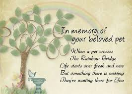 Loss Of A Pet Quotes Amazing Sympathy Quotes For Losing A Pet 48 Best Beloved Pets Rainbow Bridge