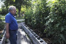 haley ward the goshen newsowner paul miller looks at his tomato plants at uncle paul s garden at 431 olive st goshen at his business miller stus