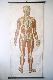Human Skeleton Wall Chart Original Anatomical Vintage German Educational School Wall