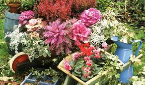 Alan Titchmarsh Tips Plant Gardening Flower Autumn