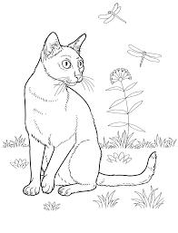 Disegni Da Colorare Per Ragazzi Con Gatti Cats 29 Disegni Da