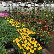paradise nurseries 1 tip