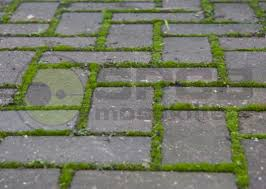 clean remove moss from a block driveway