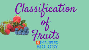 Classification Of Fruits For Neet Aiims Aipmt Jipmer Premed