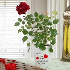 red rose plant in a personalised white conical ceramic vase