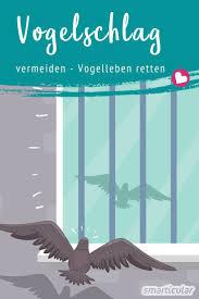 Vogelschutz Am Fenster Diese Maßnahmen Helfen Wirklich Gegen