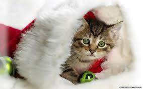 Cute Christmas Kittens - 1600x1000 ...