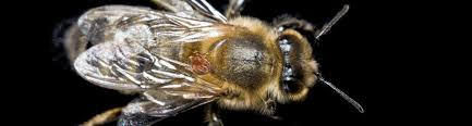 Varroa How To Test And Treat For The Varroa Destructor Mite
