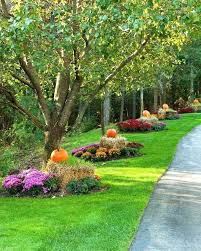 Image result for trees idea for Landscaping