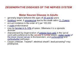 nerves system motor neuron