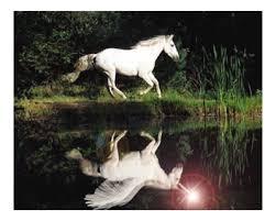 Pferde Poesie