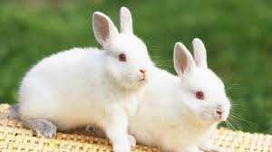 cute sweet rabbit s wallpapers