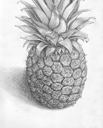 pineapple drawing. pineapple drawing by banvivirie